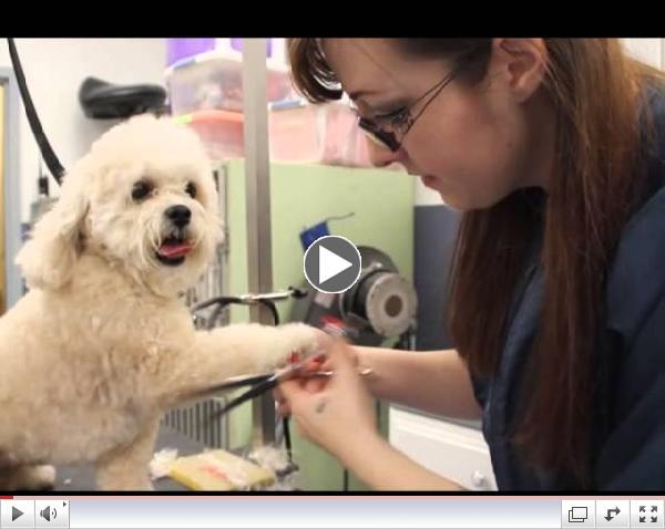 Get Grooming! A look inside our Grooming Salon & Spa