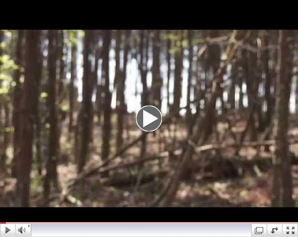 Pine Mountain Hike Trail