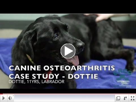 Canine Osteoarthritis - Case Study: Dottie