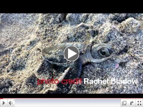 PhD student Julie Cisneros investigates beach morphology & sea turtles