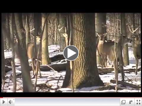 World Class Whitetails Show #1 for The Pursuit Channel