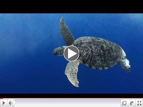 Overview | South Pacific & French Polynesia | Lindblad Expeditions-National Geographic