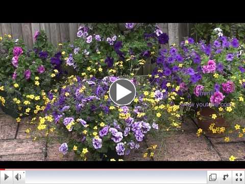 My Summer Garden - My Little Purple Eden