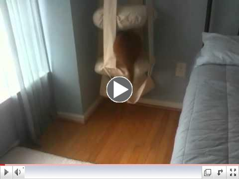 Jumping into the Cat's Trapeze
