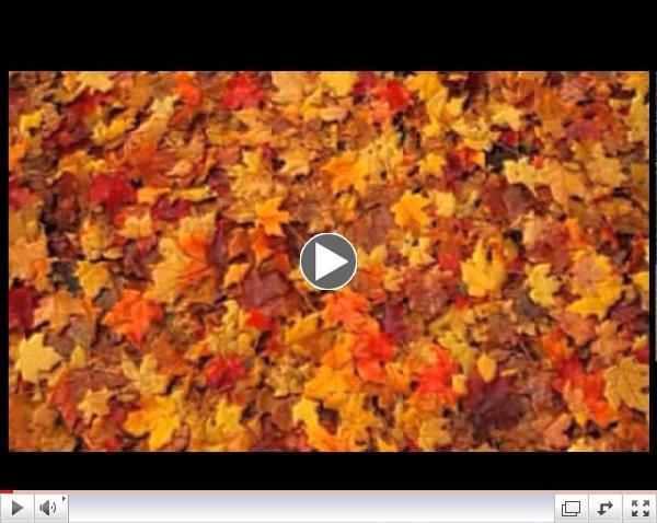 Pagan Guided Meditation - Mabon/Fall Equinox - Wheel of the Year Series