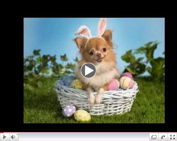 'Here Comes Peter Cottontail' - By Gene Autry - Happy Easter
