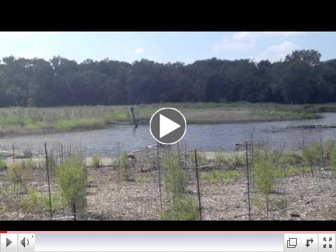 Lizard Hill Wetland Project