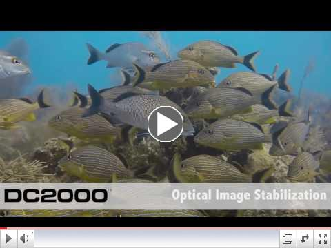 The New SeaLife 2000