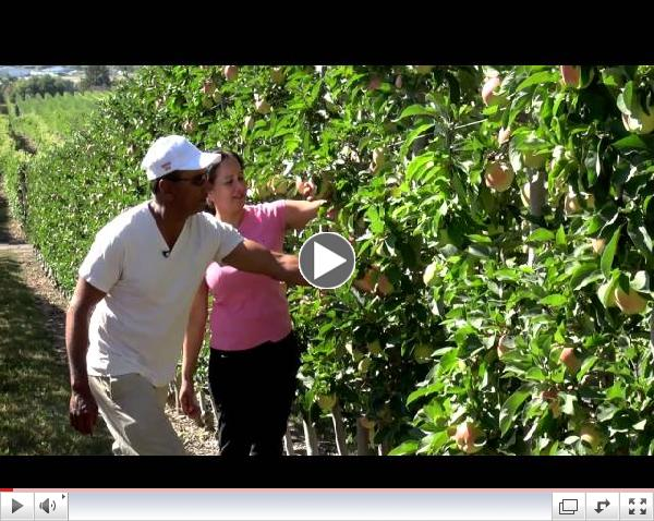 Meet Your BC Ambrosia Apple Growers Ronnie and Avtar Mann
