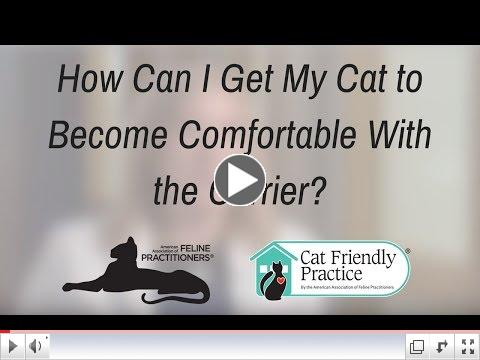 How Can I Get My Cat to Become Comfortable With the Carrier?