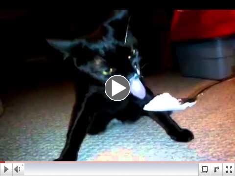 Nanako CH Kitty Eating Yogurt