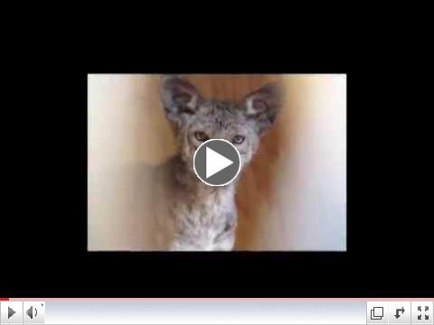Love The Wildlife Teaser V2
