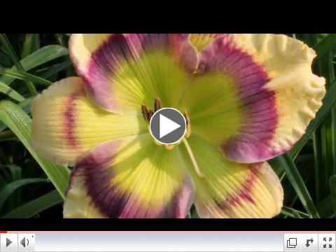AHS The American Daylily Society Promo Video