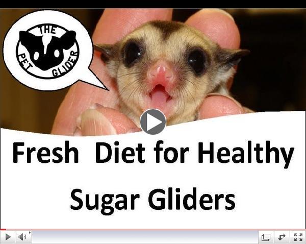 The Pet Glider Fresh Diet for Healthy Sugar Gliders