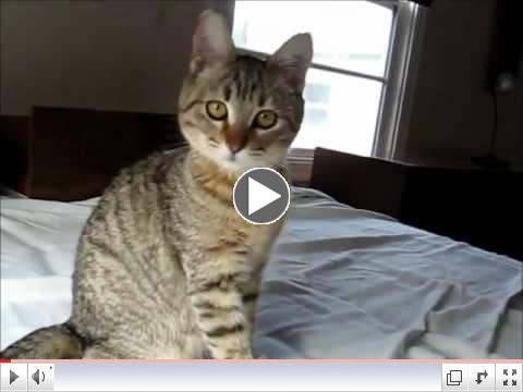 CH Kitten: Miles at 4 months