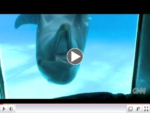 DOLPHINS REACTING TO MIRROR UNDERWATER