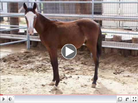 Rescued Horses - Before and After