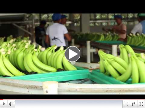 Beyond the Seal: Banana Farmers Fight for Fair Trade Fruit