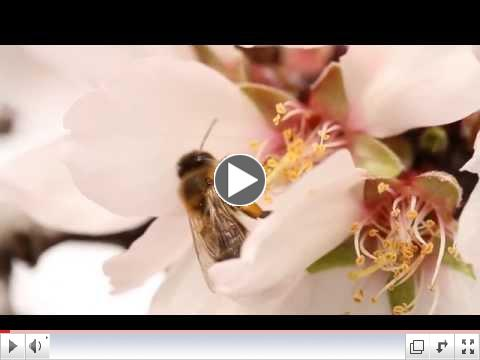 Honey Bee Best Management Practice Video | California Almonds