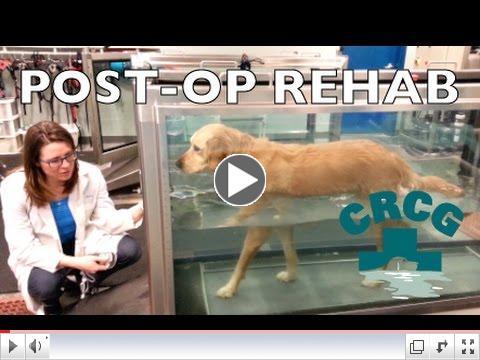 Post-Op Rehab