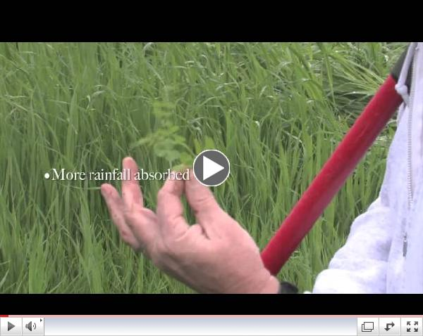 Cover Crops and Water Infiltration of Soil