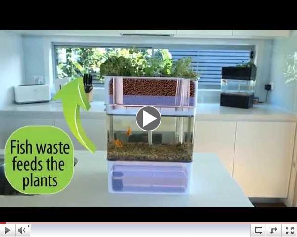 Countertop Aquaponics System : Aquaponicals - Mini Aquaponics System