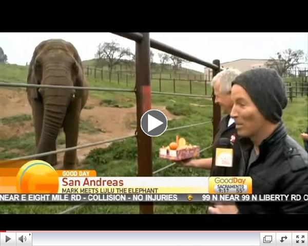Lulu the Elephant Retires Pt 4 « Good Day Sacramento