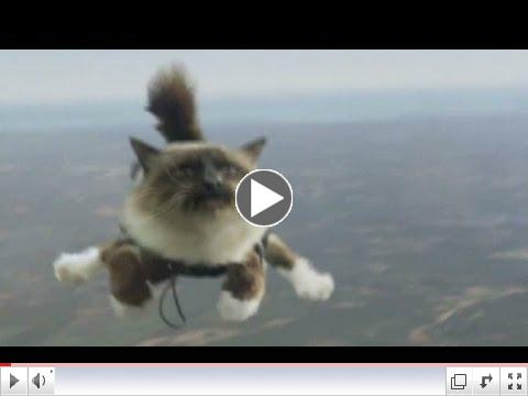 Skydiving cats