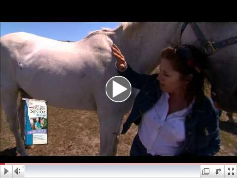 Improving the Health of Your Senior Horses