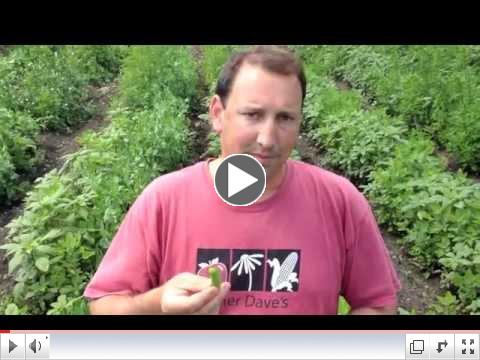 Pea Identification wtih Farmer Dave
