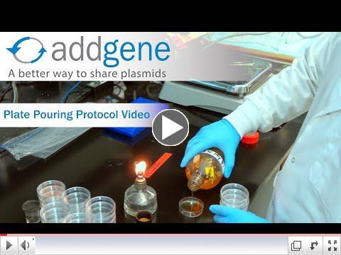 Addgene Plate Pouring Protocol Video