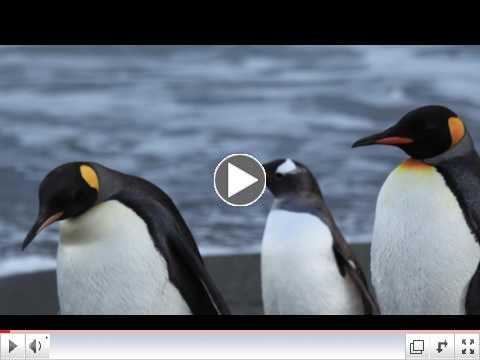 Penguin Sounds with pictures ~ Penguin Calls