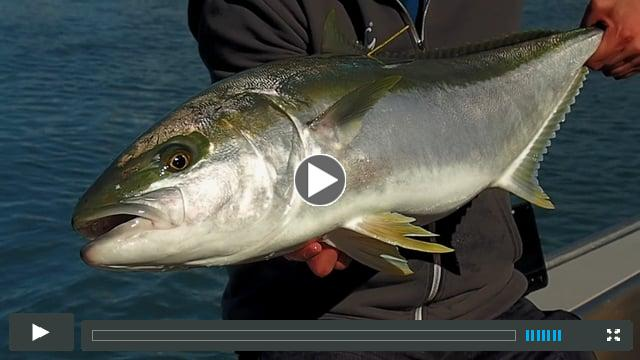 Traveltruly Presents: King Tide On The Fly - NZ Fly Fishing