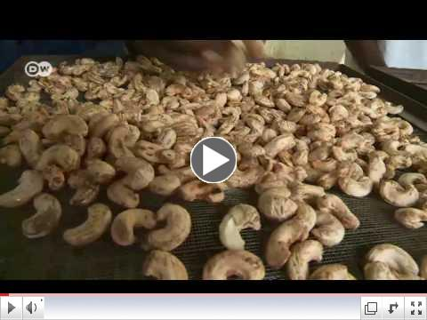From cashew nut to steak: combating poverty in Guinea-Bissau | Business/ DW