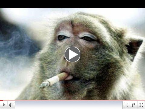 MONKEYS �� Funny Monkey Videos 2014
