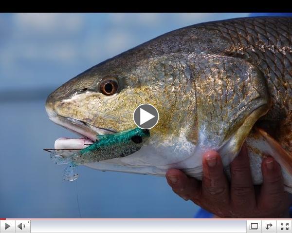 DOA Baitbuster Fishing Lure for Mosquito Lagoon Redfish