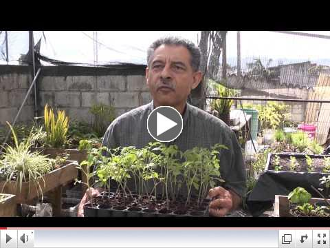Guatemala Good Works / LifeNets Hydroponic Project