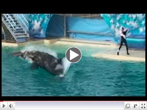 Shamu attacks and kills Pelican during show