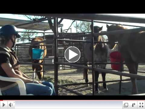 Rescue Foals in Training - ROTH reaches out at Equine Voices Day 1