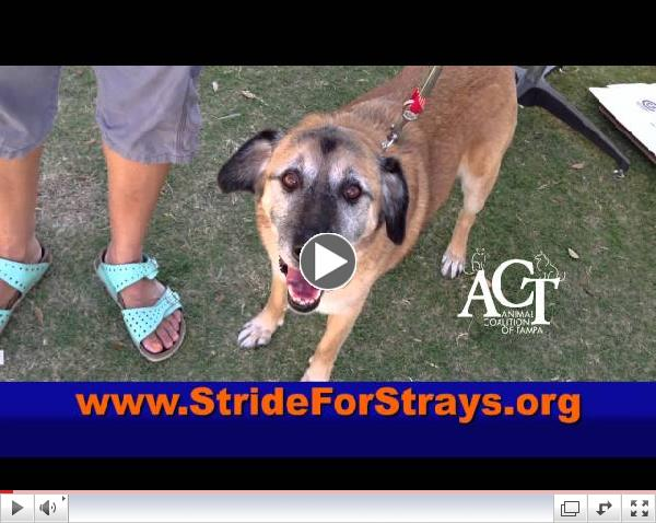 2013 Stride for Strays 30 Second PSA