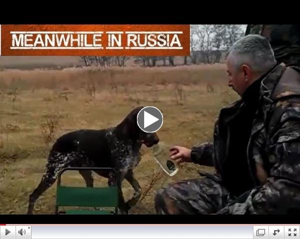 Hunting Dog Fetches Vodka