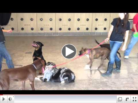 Join Partners Playgroup for Dogs