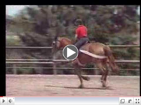 Tellington TTouch® Training for a Mare Nervous Under Saddle