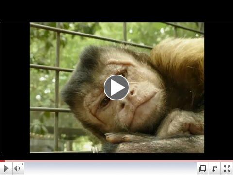 Sammy's Memorial Video