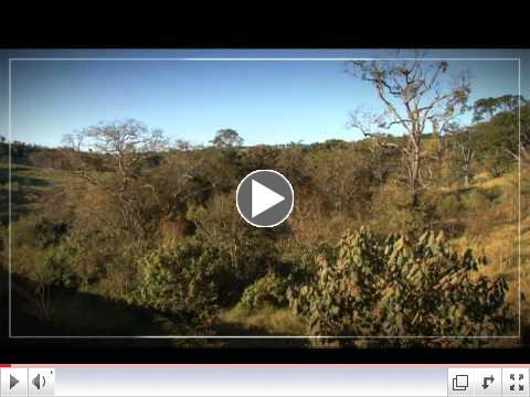 Fazenda Bau - Brazil Cerrado
