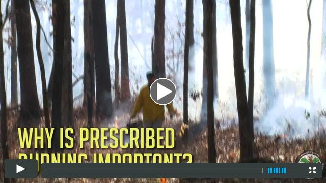 Why is Prescribed Burning Important?