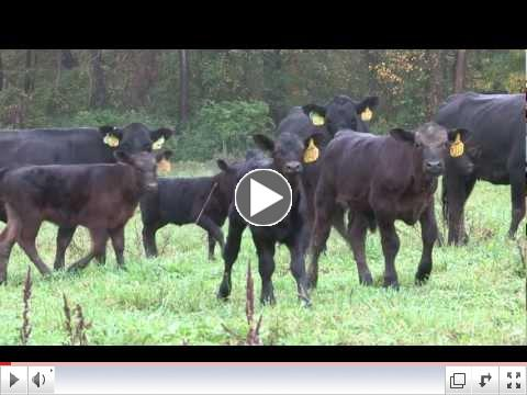 National Beef Quality Audit