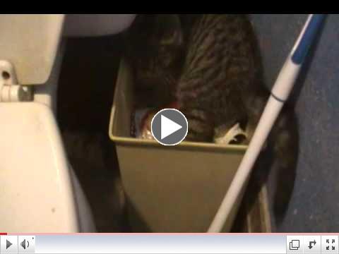 Pixie the Blind Kitten in the Trash
