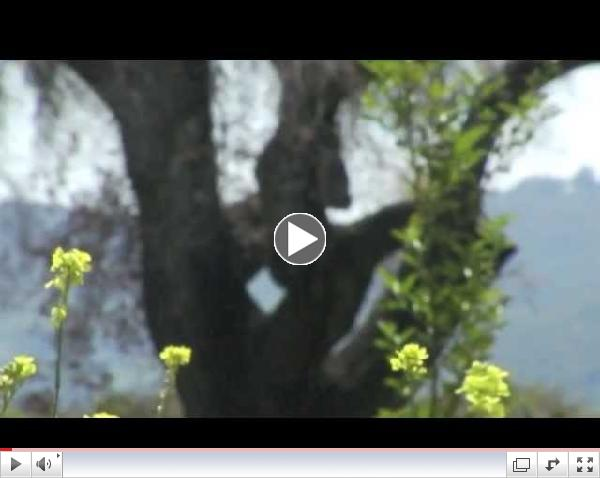 The Meditative Mind - Th3 2013 KFA May Gathering