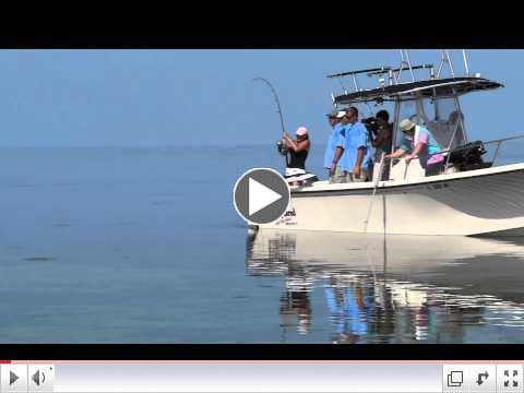 Kristie lands a lemon shark in the Florida Keys with Capt. Chris Johnson, SeaSquared Charters 7/9/11